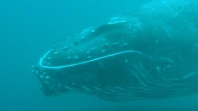My Costa Rica Whale Watching Adventure