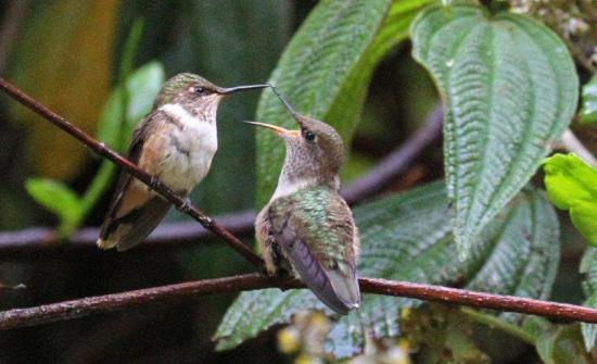 Best Birding Destinations & Tours