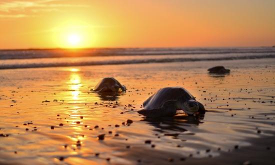 Best Costa Rica Beaches to Visit