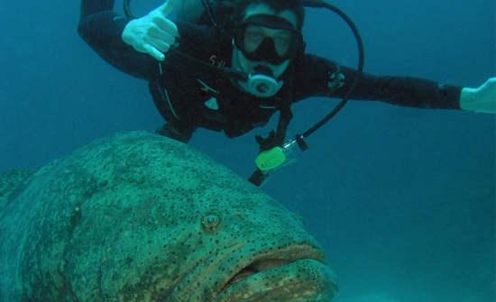 8 Best Costa Rica Diving Spots