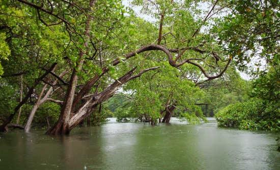 Best Costa Rica Jungle Tours & Mangrove Excursions