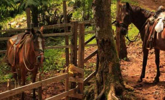14 of the Most Breathtaking Horseback Riding Tours in Costa Rica