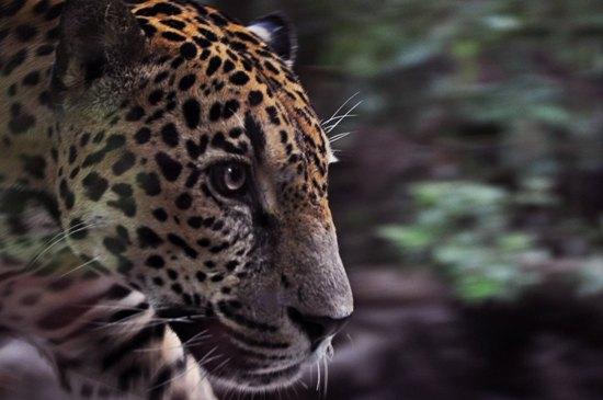 Costa Rica Animals & Wildlife