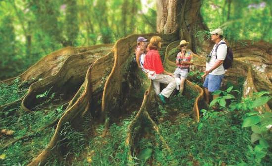 Discover the Costa Rica Rainforest