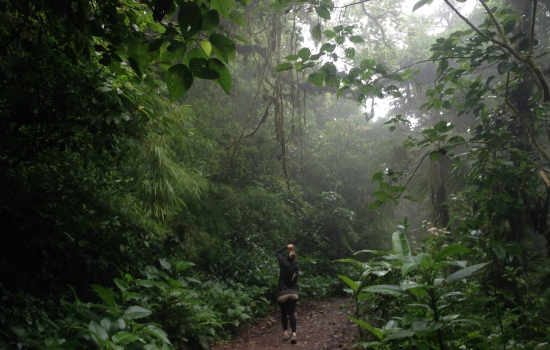 Monteverde Cloud Forest Hike in Costa Rica