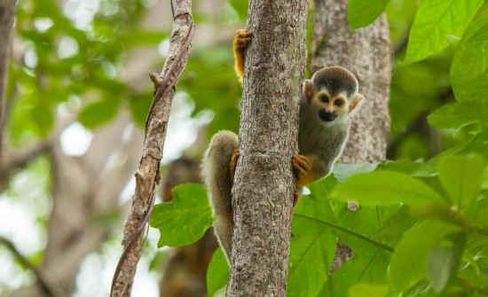 Things to Do in Manuel Antonio National Park & Quepos, Costa Rica