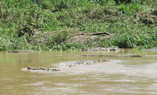 Top Costa Rica Jungle Tours & Mangrove Excursions