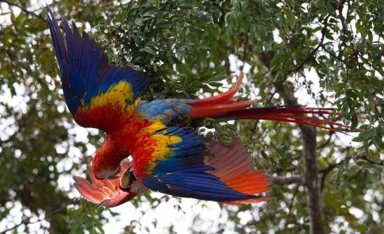 Top Ten Birding Destinations in Costa Rica