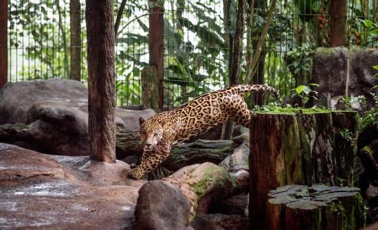 Wildlife Exhibits at La Paz Waterfall Gardens