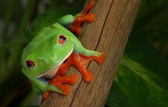 Big Five Animals of Costa Rica