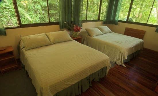 Stay at Selva Verde Lodge, Costa Rica