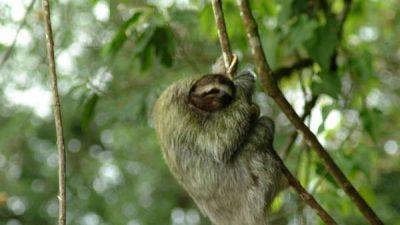 Sloth Safari Vacation Package