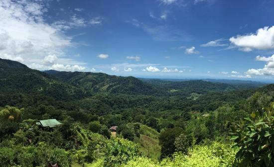 Best Costa Rica Tours for Coffee Lover