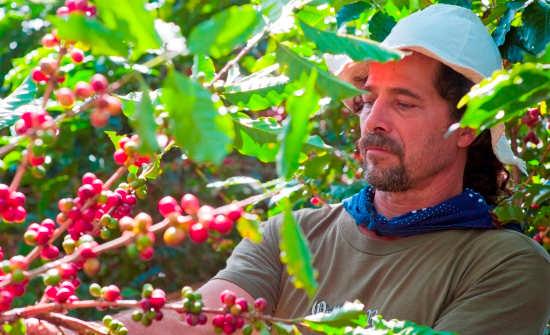6 Best Costa Rica Coffee Plantation Tours