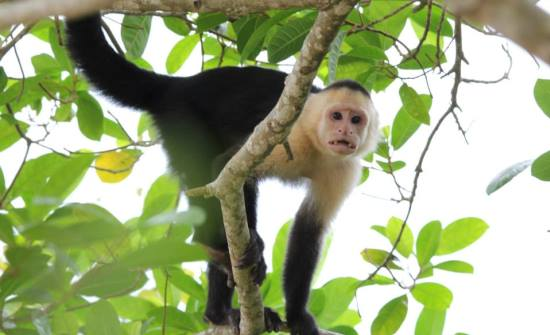 Sustainable Travel in Costa Rica