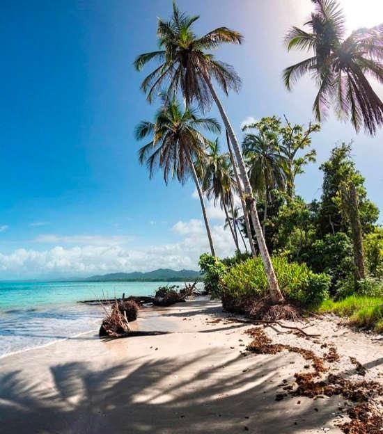 Cahuita National Park beach