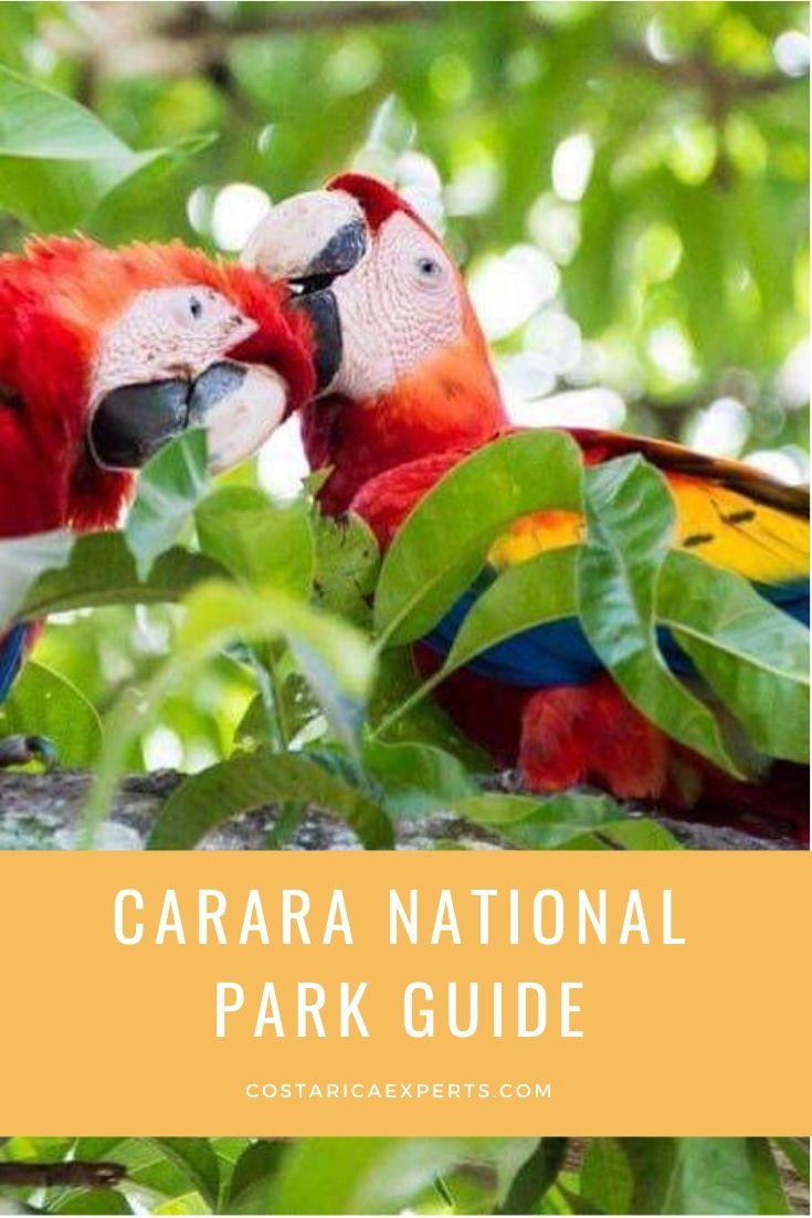 Carara National Park Guide