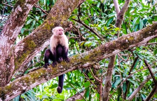 Capuchine monkey via @jforonda_photo in Santa Rosa National Park